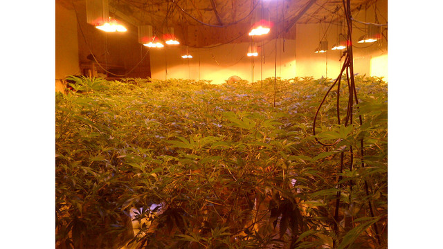 Four people arrested on drug charges for illegally growing marijuana