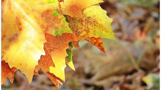 Yard waste pick up extended in Schenectady due to recent weather changes