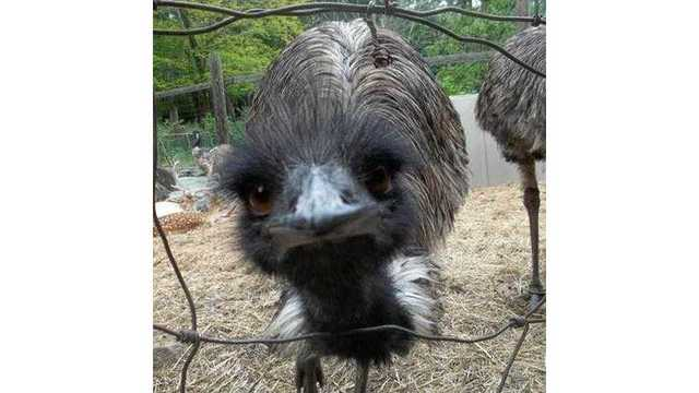 emu watch keep an eye out for charles the missing emu