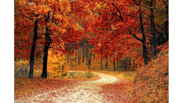 Why do we call it fall?