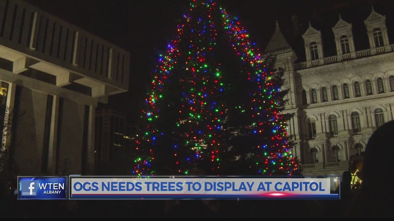 OGS needs trees to display at Capitol over the holidays