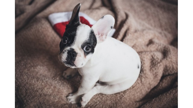 The most dangerous holiday items for pets that AREN'T poinsettias
