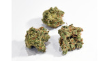 Officials: If you celebrate pot holiday, do so responsibly