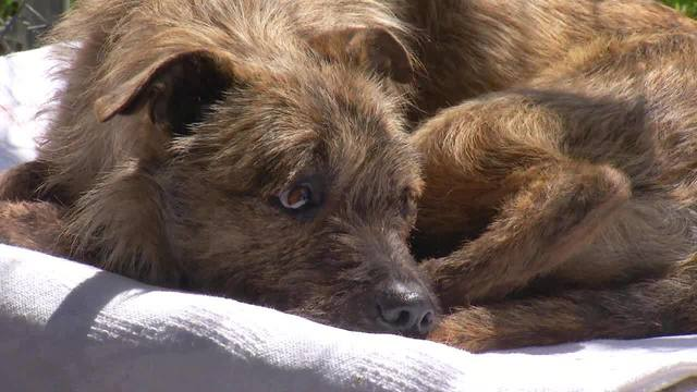 Dog rescued from ravine by first responders